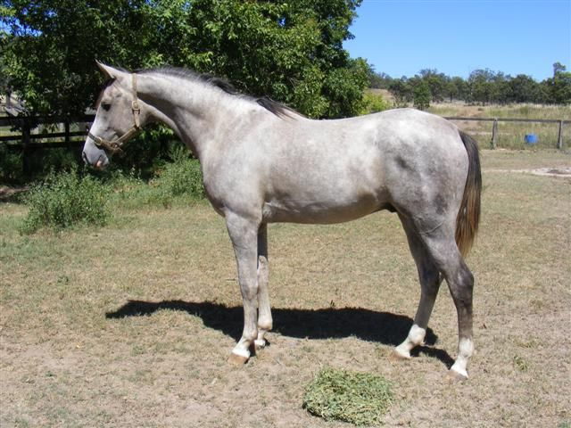 Barquero at 2yrs